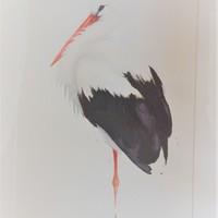 875_Mårtens_Vit stork.jpg